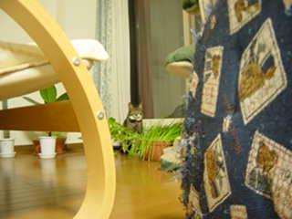 行儀の良いウチのネコ−デジカメにて撮影